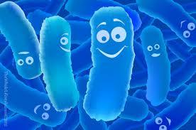 Probióticos, prebióticos e Kefir